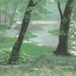 Tó az erdőben
