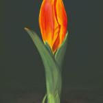 Tulipán - digitális festmény